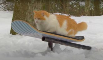 CatSnowSkate